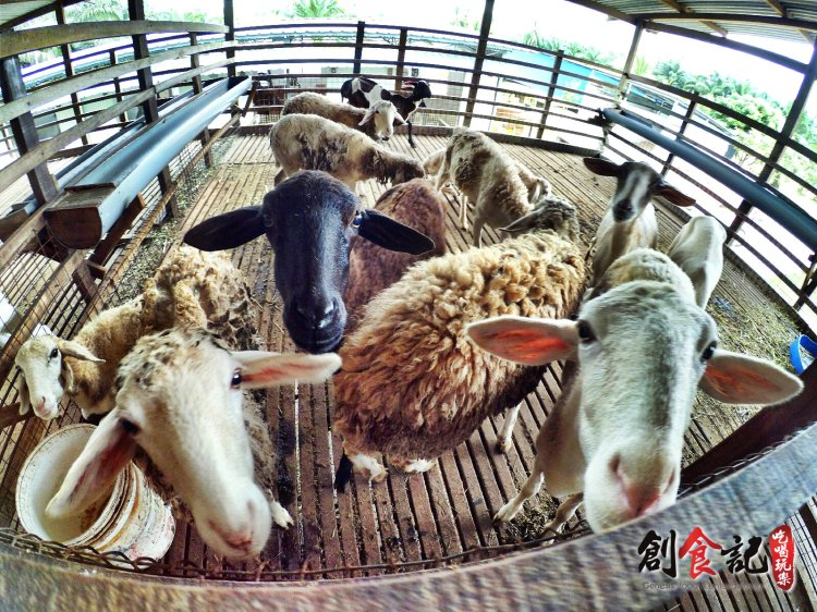 Sinar Eco Resort Pekan Nanas Johor Malaysia Family Gathering Camp Travel Adventure Tourist Attraction Farm Retreat Trip Raymond Ong Effye Ang Alfred Law Pinky Ning Estella Onn A45
