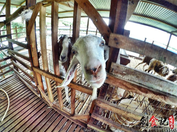 Sinar Eco Resort Pekan Nanas Johor Malaysia Family Gathering Camp Travel Adventure Tourist Attraction Farm Retreat Trip Raymond Ong Effye Ang Alfred Law Pinky Ning Estella Onn A47