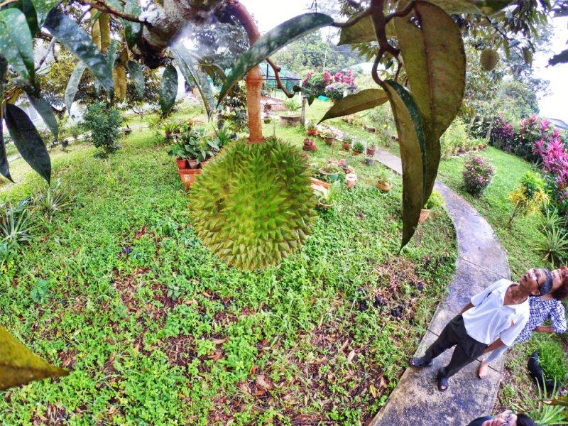 Kota Tinggi Tai Hong Johor Malaysia 52 Farm Wu Er Fan Steven Ling Jenny Lew Pinky Ning Effye Ang Raymond Ong Breakfast Oragnic Food Flower and Beautiful Garden Effye Media Online Adverti