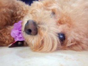 Raymond Ong Effye Ang Family Gathering Amanda Ong Dog Coffee Chinese New Year 2018 农历新春2018 狗狗 C012